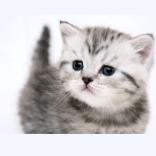 Любимец, гостиница для животных - фото (806-3457)