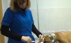 """Ветеринарная клиника """"ПОЛИВЕТ"""" - фото (700-2832)"""