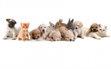 Любимец, гостиница для животных - фото (806-3458)