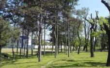 Green Grove Park - фото (8239-51589)
