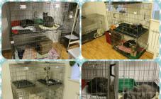 Ветеринарная клиника Долецких - фото (702-2847)