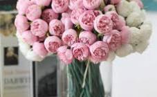 Чайная Роза - фото (8120-51241)