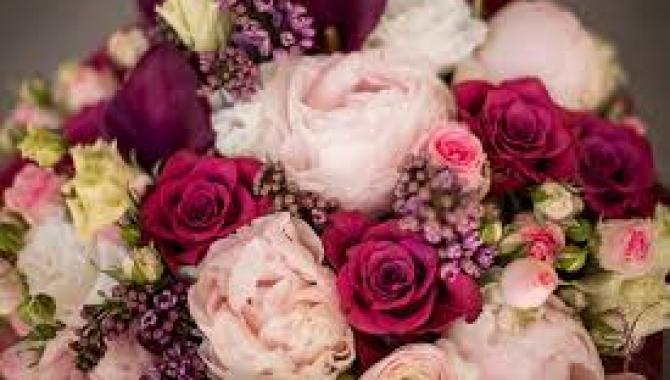 Чайная Роза - фото (8120-51242)