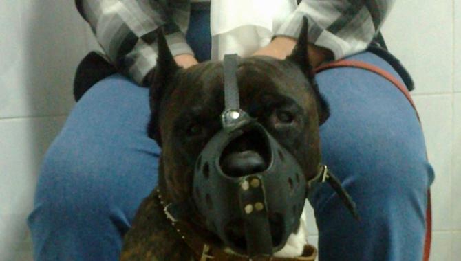 """Ветеринарная клиника """"ПОЛИВЕТ"""" - фото (700-2833)"""