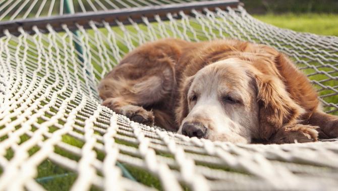 Любимец, гостиница для животных - фото (806-3460)