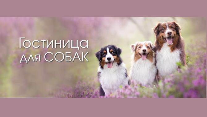 """Гостиница для животных """"Зоохобби"""" - фото (802-3441)"""