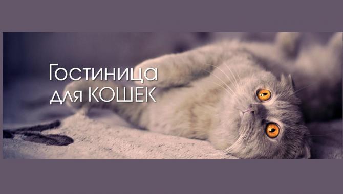 """Гостиница для животных """"Зоохобби"""" - фото (802-3442)"""