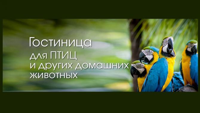 """Гостиница для животных """"Зоохобби"""" - фото (802-3443)"""